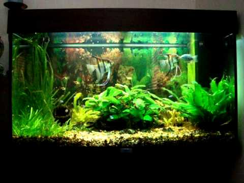 Tropical fish tank aquarium juvel rio 125 l 55 week video for Cat proof fish tank