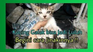 Download Video Kucing Galak.. cara jinakin kucing galak !!! |Funny Cat MP3 3GP MP4