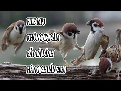 Xem phim Cú và chim se sẻ - file mp3 tiếng chim sẻ mồi dùng để bẫy keo chuẩn nhất 2020 không tiếng ồn bẫy là dính