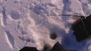 РЫБАЛКА В 32 ТАКОГО НЕ БЫЛО ПО ПЕРВОЛЕДЬЮ Ловля Окуня на Зимнюю Блесну
