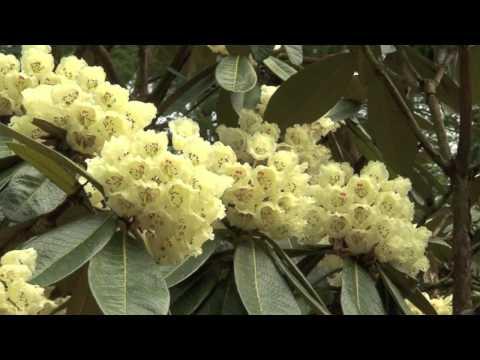 Benmore Botanic Garden - Garden Highlights