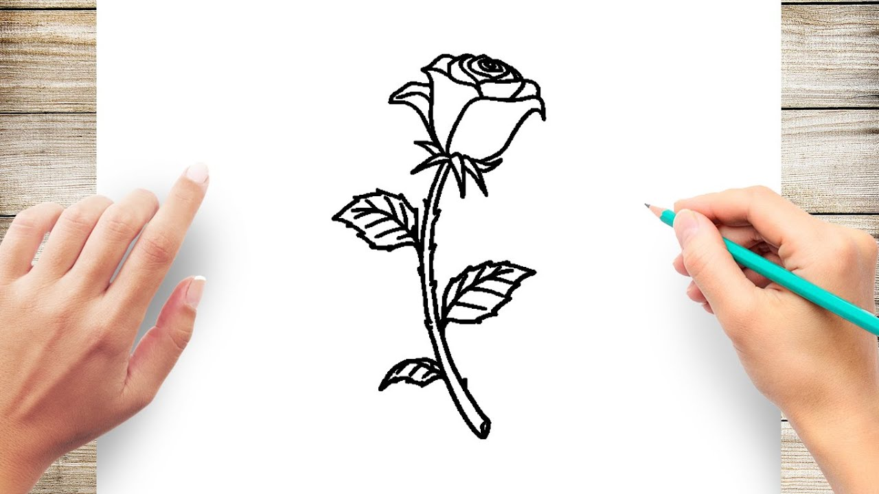 How To Draw Rose Flowers Youtube