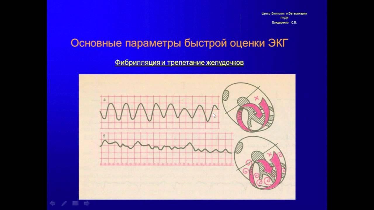 Основы электрокардиографии у собак и кошек для чайников ...
