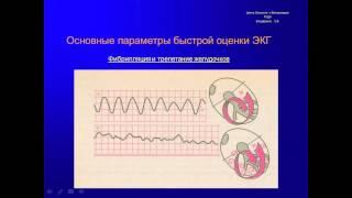 Основы электрокардиографии у собак и кошек для чайников