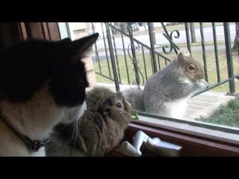 Cat and Guinea Pig Befriend Wild Squirrel