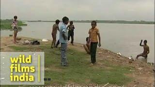 Children swimming in muddy Yamuna river, Delhi