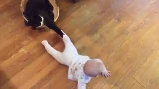 Baby and Cat Fun and Fails - Super Funny Baby Video