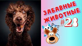 Приколы с Животными #28 / Смешные Животные / Приколы 2020 / Приколы про Животных / Лучшие Приколы