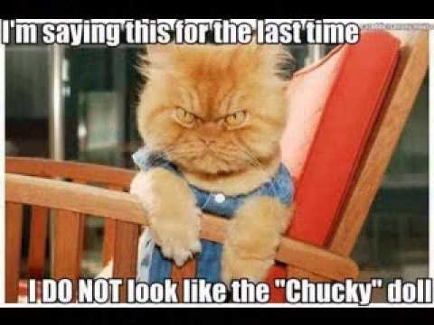 Funny animals pics with quotes by Keisha Media