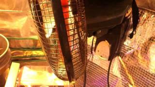 Grow Tent Finally in 400 watt HPS & 400 watt MH
