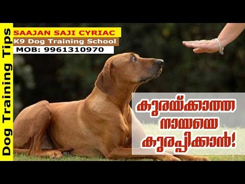 Dog Training Tips: How to Make Your Dogs Bark! Saajan K9 Dog Training School