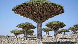 The Strange Trees On 'Alien Island'