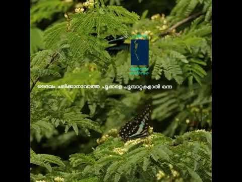 Premam butterfly love