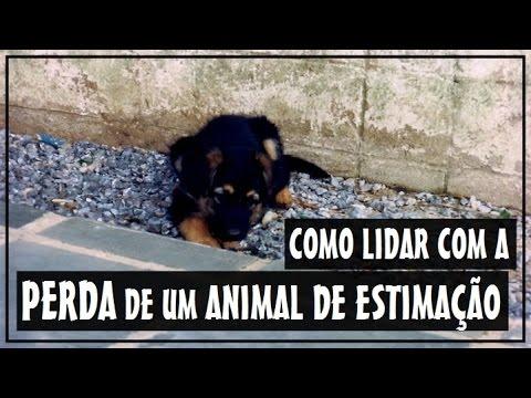 Como Lidar Com A Perda De Um Animal De Estimação Divã Veterinario