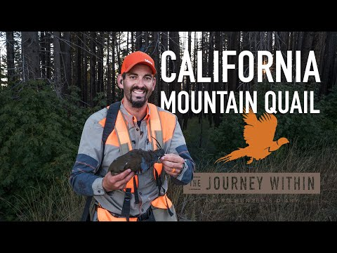 Mountain Quail, Northern California: The Journey Within - A Bird Hunter's Diary | Mark V Peterson