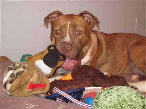 Wooftown - ADOPT A DOG