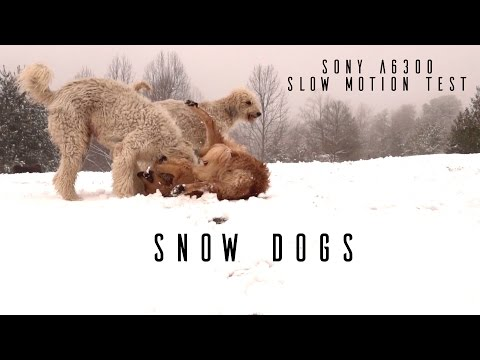"Sony A6300 Slow Motion Footage: ""Snow Dogs"""