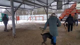 Дрессировка собак в Гатчине