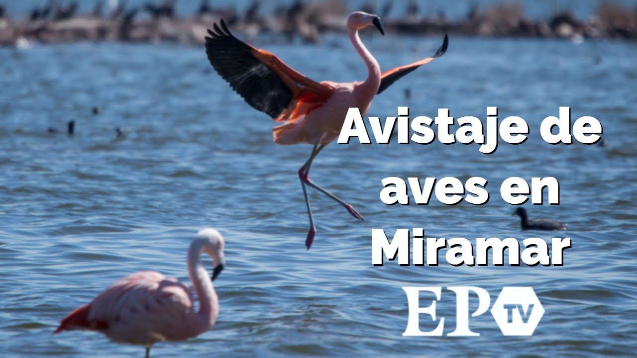 Avistaje de aves en Miramar