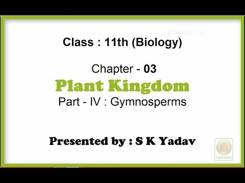 Ch 3 Plant Kingdom Part 4 Gymnosperms Class 11th Biology explained in Hindi