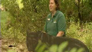 WJW Fox 8 Cleveland does a ridiculous story on a bear in a lady's backyard