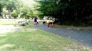 上半身、下半身、体幹部をバランス良く刺激するバーピートレーニングか...