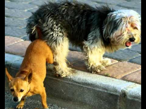 профессии прошлого почему собаки прилипают друг к другу плохо без
