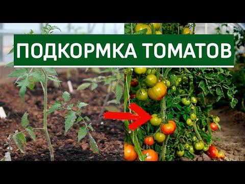 Вопрос: Как и чем органически удобрить помидоры?
