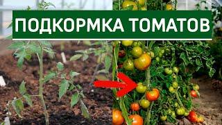 Подкормки томатов. Чем, когда и как подкармливать (удобрять) томаты (помидоры)?. Часть1