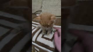 Отдаю двоих симпатичных котиков в хорошие руки