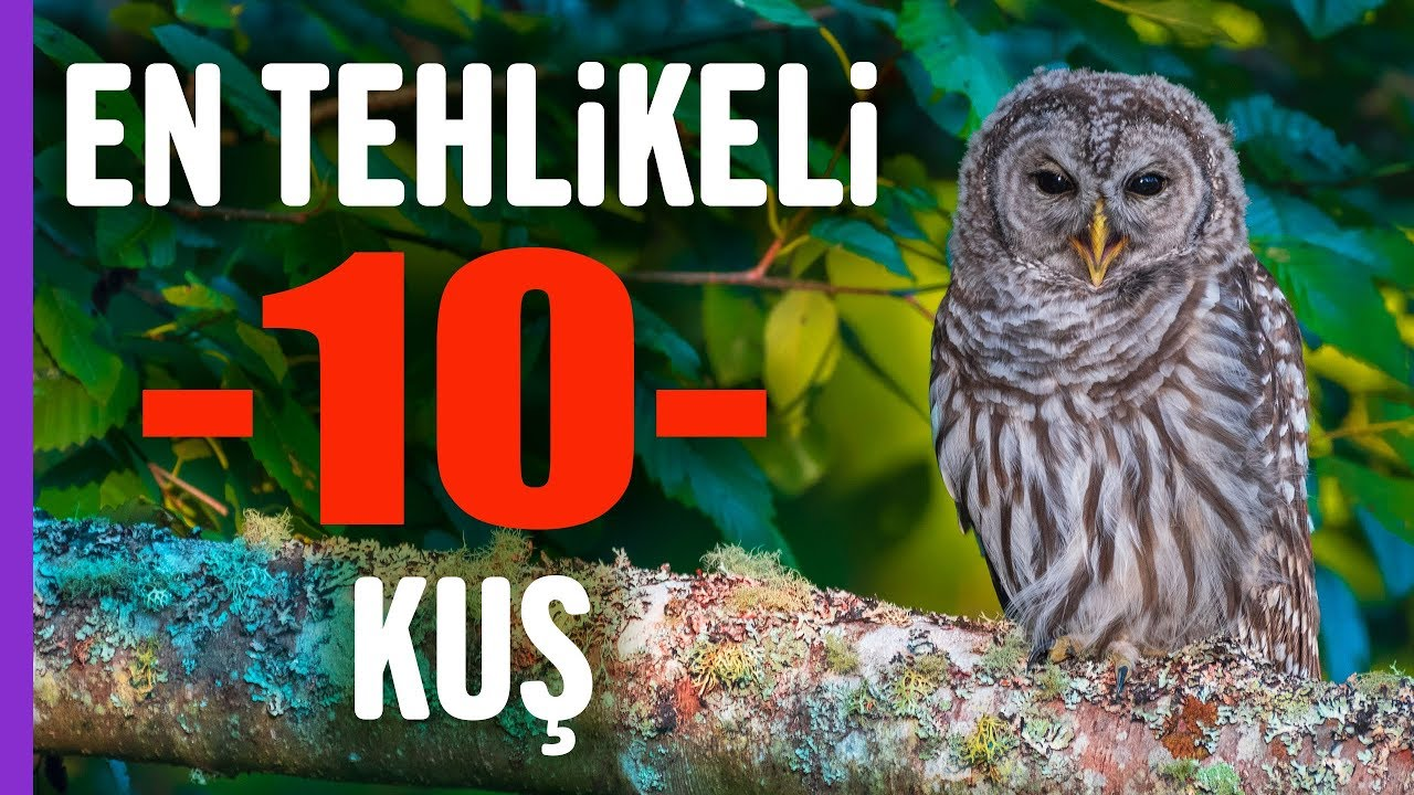 İşte en tehlikeli 10 kuş türü! | Hayvanlar Alemi | Aklında olsun