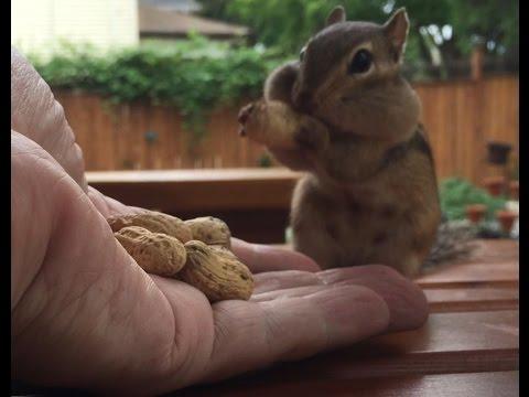 Chipmunk Lunch Time