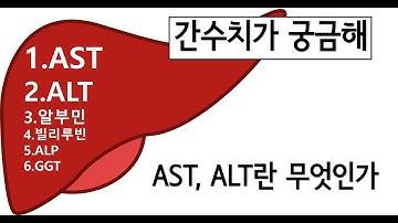 간수치 (간기능검사) - AST, ALT란 무엇인가?