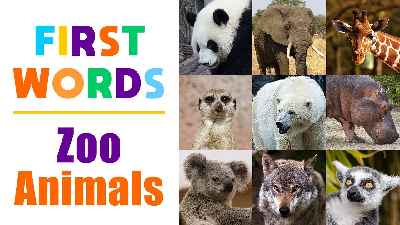 Learning Zoo Animals Names For Children