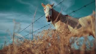 Animals | Horse Fence