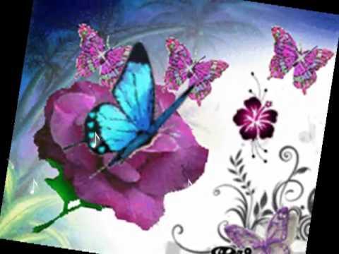 Magica serata come un volo di farfalla youtube - Immagini di farfalle a colori ...