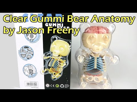 Clear Gummi Bear Anatomy - Designed by Jason Freeny - YouTube