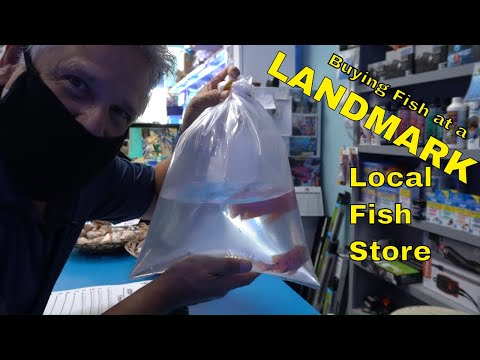 Los Angeles Local Fish Store [A LANDMARK!] - Shop Tour And ***I Had To Buy These Fish!***