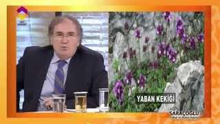 Bağırsakta Oluşan Amipler İçin Kür - DİYANET TV