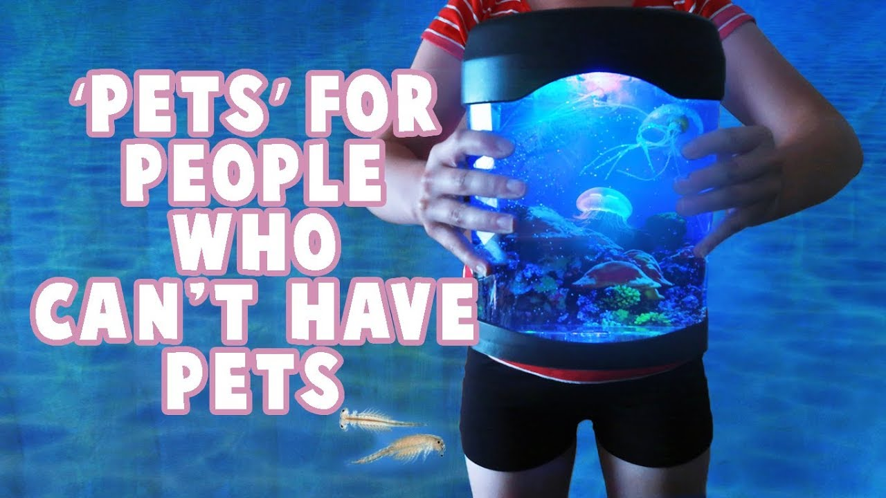 Pet Ideas For People Who Can't Have Pets!