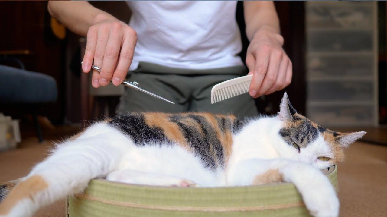 猫の毛刈り