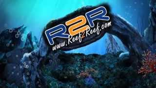 REEF2REEF TV Episode 1 (Tank Series)