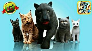 ИГРАЕМ в СИМУЛЯТОР КОШКИ | Котенок Мэйн Кун #1 Развлекательное видео для детей. Мульт-игра про котят