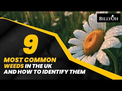 9 Most Common Weeds In The UK and How to Identify Them - Easy Gardening Hacks For Beginners