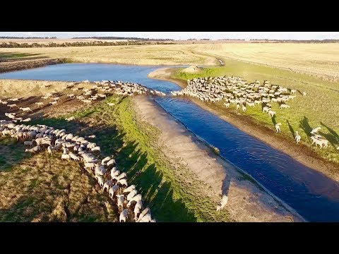 Sheep Farming | Marbilling Farms, Western Australian Wheatbe