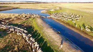 Sheep Farming | Marbilling Farms, Western Australian Wheatbelt