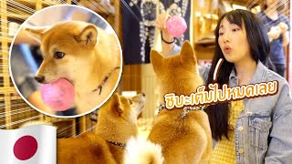 ซอฟท่องโลก: ลุยคาเฟ่หมาชิบะ ตามกินของอร่อยย่านฮาราจูกุ【เที่ยวญี่ปุ่น-โตเกียว】