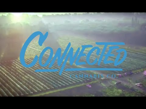 Berners Cookies Connected Cannabis Co releases 2017 Harvest Video showing their outdoor operation