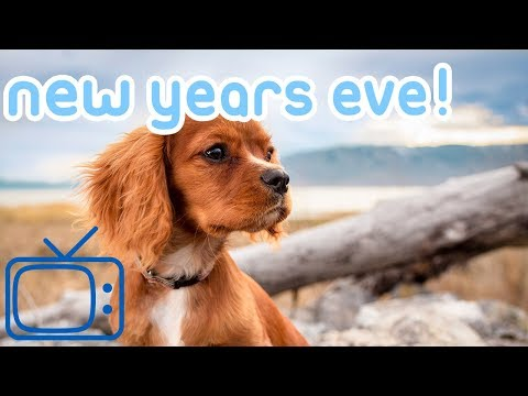 New Years Eve Dog TV! Entertainment for Dogs on NYE with Music!