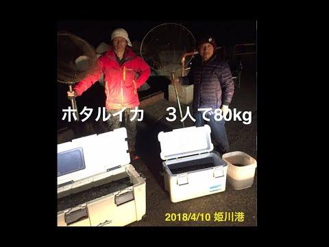 2018/4/10 姫川港でのホタルイカすくい!!な・な・なんと80Kgすくえました。